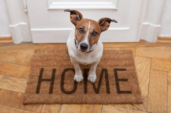 Dog on Welcome Home Mat