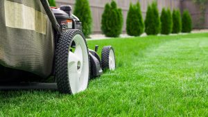Landscaping Tips to Increase the Value of Your Home